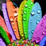 Тест определит тип вашей личности по цветам, которые вы ненавидите