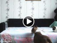 Пёс и скрытая камера