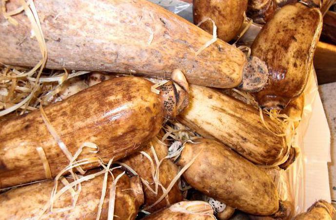 Корни лотоса: свойства, рецепты приготовления, польза и вред